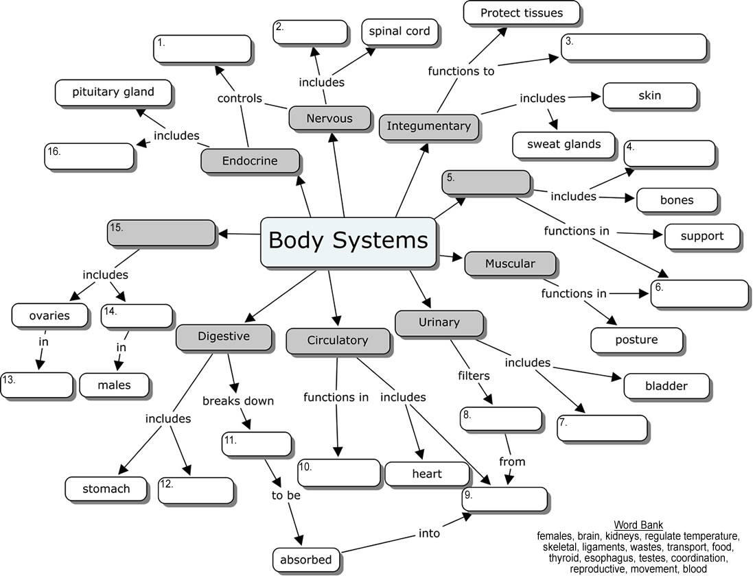 worksheet Integumentary System Worksheets introduction to anatomy and physiology corner organ systems concept map